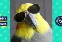 Funny BIRDS & PARROTS Compilation 2017 | Funny Vine