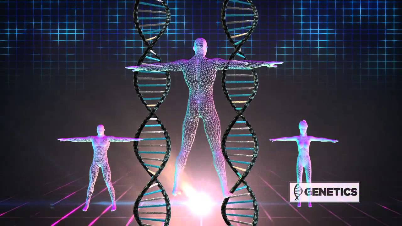 The Secret to a Perfect Body - Genetics