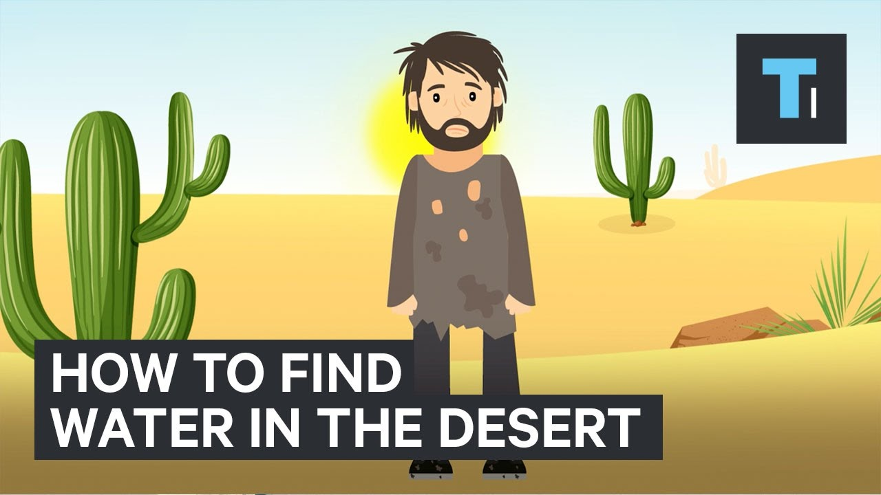 How To Find Water If You're Ever Stuck In A Desert