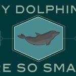 How smart are dolphins? - Lori Marino
