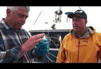 Bizarre Foods: Andrew's Top 5: Newfoundland