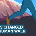 How Shoes Changed The Way Humans Walk