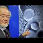 'Self-Eating Cell' Research Wins Nobel in Medicine
