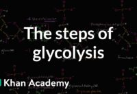 Steps of glycolysis | Cellular respiration | Biology | Khan Academy