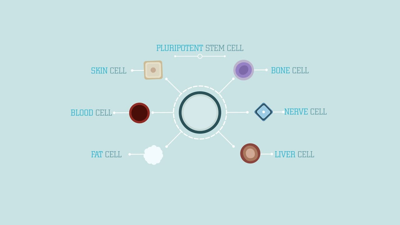 What are stem cells? - Craig A. Kohn