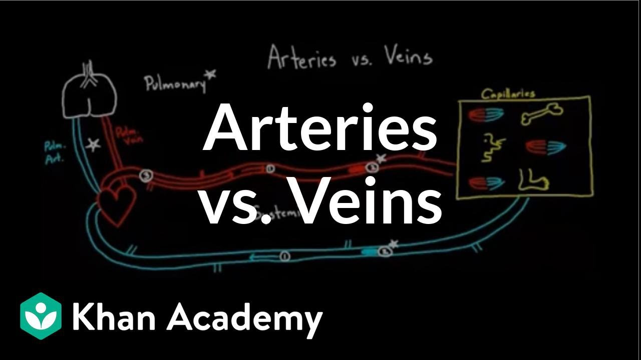 Arteries vs. veins-what's the difference? | Circulatory system physiology | NCLEX-RN | Khan Academy