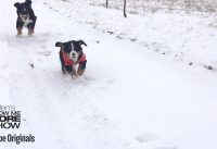 Epic or Fail: Epic Snow Pets