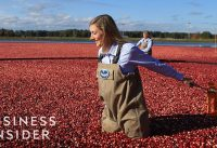 How Ocean Spray Harvests 220 Billion Cranberries A Year