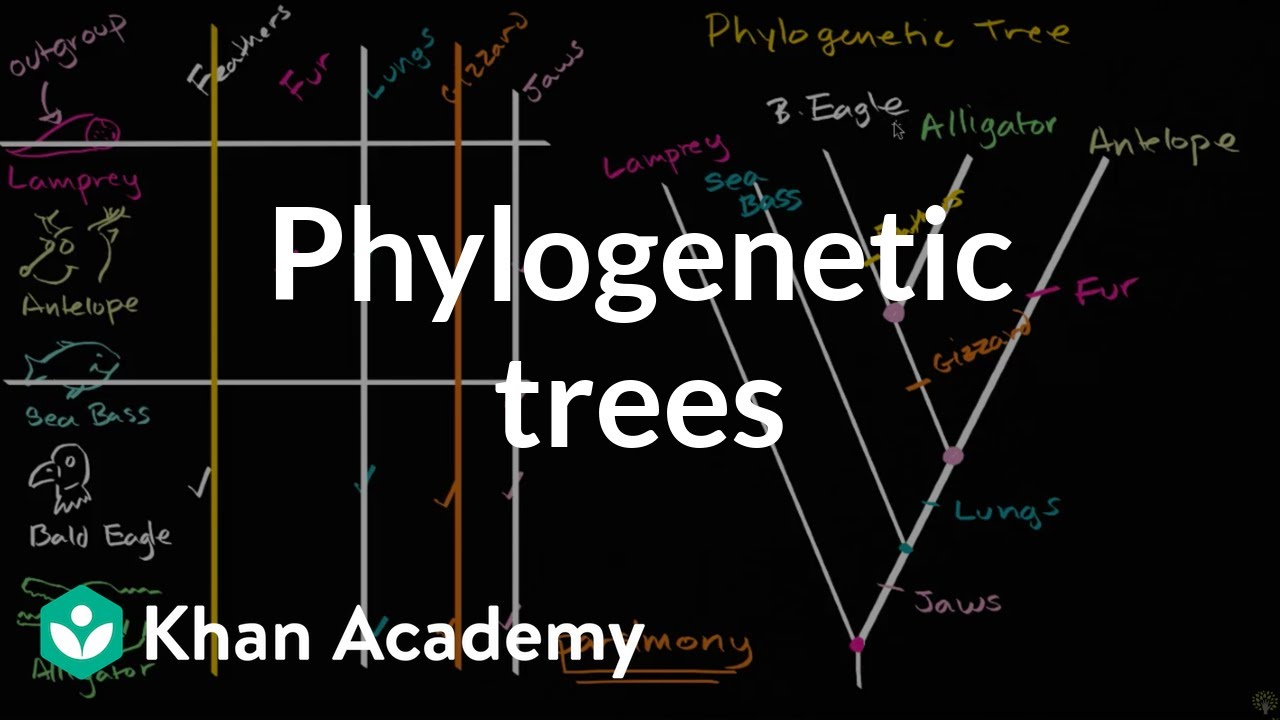Phylogenetic trees  | Evolution | Khan Academy