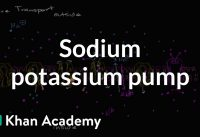 Sodium potassium pump | Membranes and transport | Biology | Khan Academy