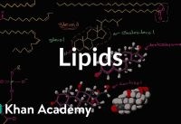 Lipid overview | Macromolecules | Biology | Khan Academy