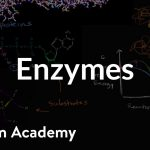 Enzymes | Energy and enzymes | Biology | Khan Academy