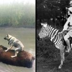 WILD Animals We've NEVER Been Able To Domesticate!